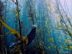 Seal of Approval. Winner of 2013 amateur underwater photography contest.