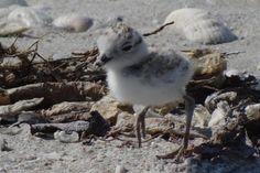 Sanibel island Florida bird pic