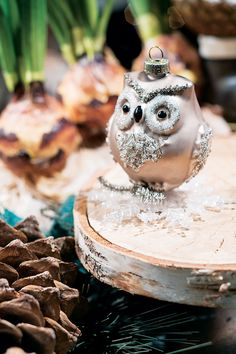 This cute little owl found a snowflake before it melted!