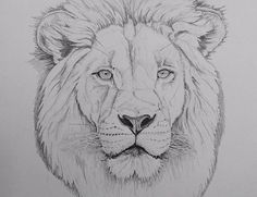 With the weather we're having this autumn, I'm trying a bit more drawing rather than getting the camera out. Pencil Sketch Drawing, Art Drawings Sketches Simple, Animal Sketches, Pencil Art Drawings, Animal Drawings, Lion Face Drawing, Lion Drawing Simple, Lion Painting, Painting & Drawing