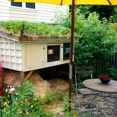 Rabbit Hutch/Green Roof Strawberry Patch
