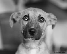Here's what you need to know before you bring a new puppy home from a shelter.    Dog photography by Emma O'Brien award winning portrait photographer Shelter Puppies, Rescue Puppies, Dogs And Puppies, Dog Photography, Dog Portraits, New Puppy, Photoshoot Ideas, My Images, Adoption