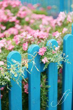 Blue fence...
