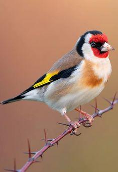 Felt Birds, Birds 2, Exotic Birds, Colorful Birds, Bird Pictures, Nature Pictures, Pretty Birds, Beautiful Birds, Gods Glory