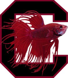 #gamecocks Fear the Fish!!!
