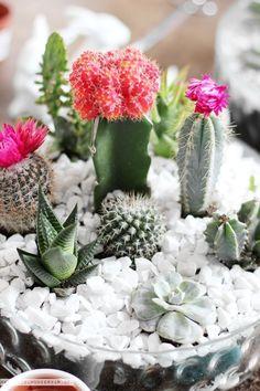 The best tutorials for DIY TERRARIUMS - GET CREATIVE: … DIY TABLETOP CACTUS & SUCCULENT GARDEN / TERRARIUM! #cactusflowerdiy