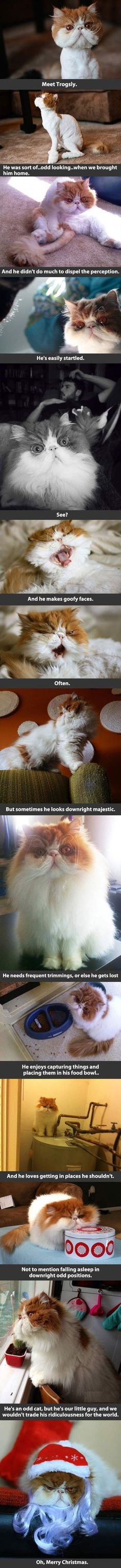 Awesome kitty cat