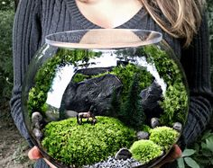Terrarium Bowl with Miniature Horse