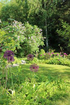 My garden in beginning of june. - Lindas trädgårdsblogg
