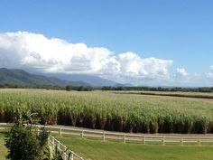Cane fields near Port Douglas, Far North Queensland