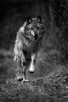 La libertad en la tierra de lobos.