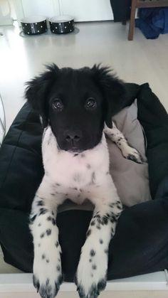 Beautiful puppyness