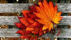 Dry_Leaves_Autumn-full-hd-picture.jpg (1920×1080)