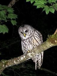 Owl Prowl Party and Night Hike Seattle, WA #Kids #Events