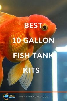 The best 10 gallon aquarium kits for beginners aquarist. A simple way to start with aquarium and fish keeping Aquarium Pump, Aquarium Kit, Aquarium Ideas, Tropical Freshwater Fish, Freshwater Aquarium Fish, Diy Aquarium Filter, Goldfish Care, 10 Gallon Fish Tank, Cool Fish Tanks