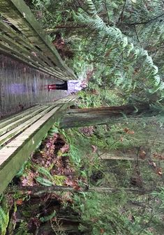 From woodsy loops to seaside trails, perfect starter hikes for young kids