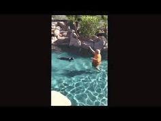 Peoria dog training ''k9katelynn'' teaches ''fritz '' (Border collie) how to swim in the pool at Peoria ,AZ ! See more about phoenix dog training at k9katelynn.com