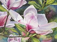 Saucer magnolia watercolor painting by artist Lisa Hill