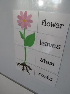 Parts of a plant matching activity. Love adding magnets and felt for felt boards! Preschool Science, Preschool Lessons, Preschool Learning, Science Lessons, Teaching Science, Science Activities, Science Centers, Preschool Classroom, Classroom Activities