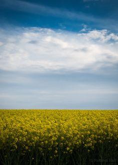 lensblr-network: Norfolk sky by Robert Eke Photography (roberteke.tumblr.com)