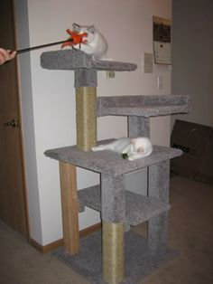 Cat trees outdoor cats and cat condo on pinterest for Do it yourself cat condo