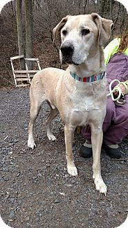 Spike Little Adopt Animals Dogs Pet Adoption Animal Shelter