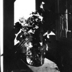 Fotografia stenopeica di una natura morta su pellicola Fomapan 100 ISO 😍  Foglie e fiori vengono dalla bellissima Riserva Naturale Di Pietraporciana 🌷🍂🌼🌿