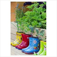 What to do with those adorable garden boots when your kids outgrow them?  Plant up a rain boot garden!