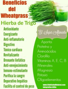 Wheatgrass El SuperAlimento de Hierba de Trigo - Club Salud Natural
