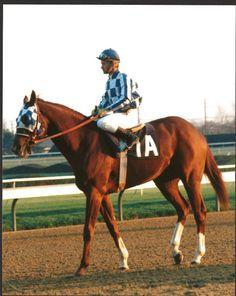 SECRETARIAT - ORIGINAL 8X10 1972 GARDEN STATE STAKES PHOTO! in Sports Mem, Cards & Fan Shop, Fan Apparel & Souvenirs, Horse Racing | eBay