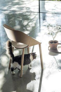 stolička KABIRA WOOD ST-4WL #bar #chair  #stolicka #design #alvex #restaurant #gastronomy #forest #terrasse #cat #wood #woodchair Dining Chairs, Cats, Wood, Restaurant, Furniture, Design, Home Decor, Gatos, Decoration Home