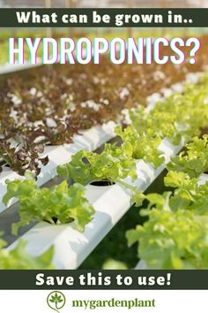 Here are the most common plants of what can be grown using the hydroponic system: Lettuce, Spinach, Strawberries, Herbs, and Bell Peppers. Growers and gardeners have found that they thrive best in hydroponics with having the right hydroponic medium! Hydroponics System, Hydroponic Gardening, Aquaponics, Organic Gardening, Garden Tips, Lawn And Garden, Garden Projects, Garden Ideas, Planting Vegetables
