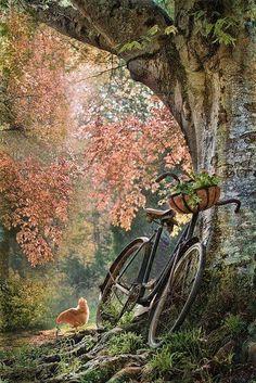 Bicicleta é o transporte De quase todo lugar Na reta e nas subidas Nas montanhas e além mar Serve pro corpo e mente Torna o sangue mais quente Vamos todos pedalar.
