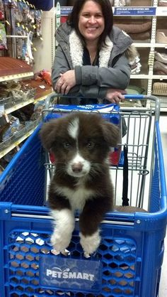 Aww... a Border Collie Puppy! ❤️