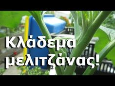 YouTube Permaculture, Agriculture, Vegetables, Nature, Youtube, Plants, Onion, Gardening, Naturaleza
