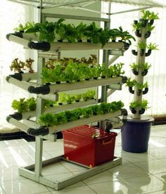 creative idea,kitchen decoration ideas with lettuce plants Hydroponic Vegetables, Hydroponic Grow Systems, Aquaponics Diy, Hydroponics System, Hydroponic Gardening, Indoor Farming, Organic Farming, Organic Gardening, Vertical Garden Systems