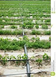 Afbeeldingsresultaat voor irrigatie