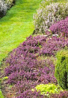Pour fleurir ses massifs sans tout acheter en jardinerie, miser sur les vivaces et suivez nos tours de main pour en tirer le meilleur parti. Geranium Vivace, Sidewalk, Stone, Outdoor Decor, Tours, Souffle, Gardens, Plants, Border Plants