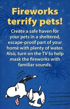 Fireworks scare pets