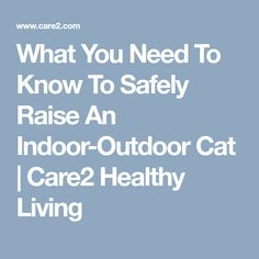 What You Need To Know To Safely Raise An Indoor-Outdoor Cat | Care2 Healthy Living