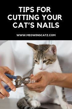 Best Tips For Cutting Your Cat's Nails and product recommendation cut cat nails with human clippers, cutting cat nails, cutting cats nails, how often to cut cat nails, how to cut cat nails Cat Diseases, Cat Skin, Sick Cat, Video Chat, Cat Care Tips, Pet Care, Kitten Care, Cat Health, Kitty
