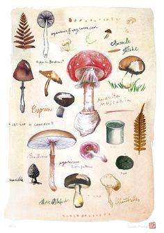 Mushroom poster, Fungi print, Watercolor botanical art, Natural history illustration, Kitchen decor via Etsy Illustration Arte, Illustration Botanique, Botanical Illustration, Impressions Botaniques, Art Watercolor, Mushroom Art, Kitchen Art, Kitchen Walls, Kitchen Decor