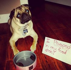 17 Hilarious Dog Shaming Pictures | K9 of Mine