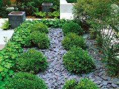 Slate Chips Used to Mulch Garden Pathways - really love this look...maybe we could get the old slate from the roof to do this with?