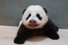 Afbeeldingsresultaat voor schattigste dieren ooit