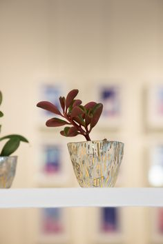 Collection UNIQUE & PIC, succulent cactus and ceramic, chez Joyce Gallery Paris, Palais Royal, uniquepic.fr