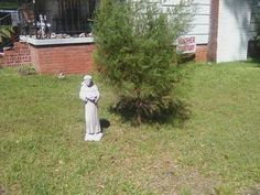 Saint Francis is keeping company with the Leyland Cypress, or False Cypress. 5 year old.