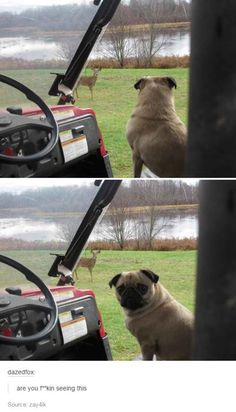 OWNER THERE IS A DOG I SENSE IT CAN YOU SEE! HUMAN I ASKED YOU A QUESTION CAN YOU SEE THE DOG?!?!?!?- Pug 2016