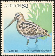 Latham's Snipe stamps - mainly images - gallery format