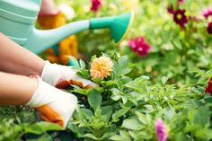 Work your way to zero waste gardening this spring. There are plenty of ways to reduce, reuse, recycle, and upcycle so that your plants — indoors or outdoors — and lawn care are super green.